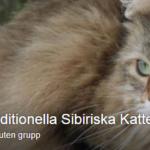 traditionella sibiriska katter